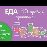 10 правил прикорма - Доктор Комаровский